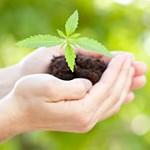 Australia: Lawmakers Poised To Permit Medical Marijuana Production-media-1