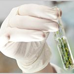 Louisiana: Governor Signs Legislation Amending State's Dormant Medical Marijuana Law-media-1