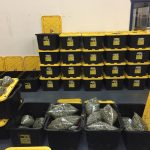 Controversy Erupts Around $10 Million Bust of Legal Marijuana Grow-media-3
