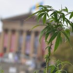 Pop Up Weed Gardens: Growing Consumer Rights-media-5