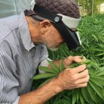 Growing Worries: Humboldt Cannabis Farmers Divided on Proposition 64-media-2