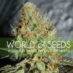 Thank You To Our Renewing Sponsor World of Seeds-media-4