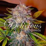 Thank You To Our Renewing Sponsor Delicious Seeds-media-3