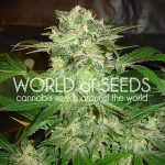Thank You To Our Renewing Sponsor World of Seeds-media-3