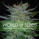 Thank You To Our Renewing Sponsor World of Seeds-media-2