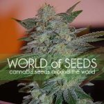 Thank You To Our Renewing Sponsor World of Seeds-media-5