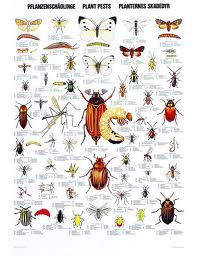 Beetle Identification Chart