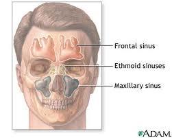 Sinus infection 2000 mg amoxicillin
