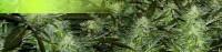 DanDiego1114022815035.jpg