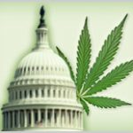 Happy 4/20! NORML Unveils Our 2016 Congressional Scorecard-media-1